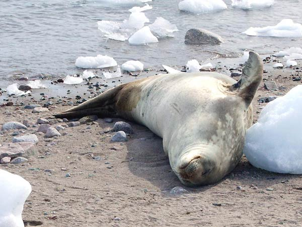 antarctique-40.jpg