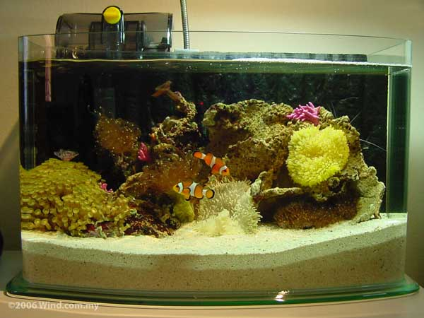 aquariophilie eau douce choisir son aquarium. Black Bedroom Furniture Sets. Home Design Ideas