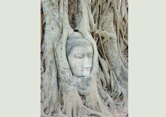 arbre-entete-277595-207405b.jpg