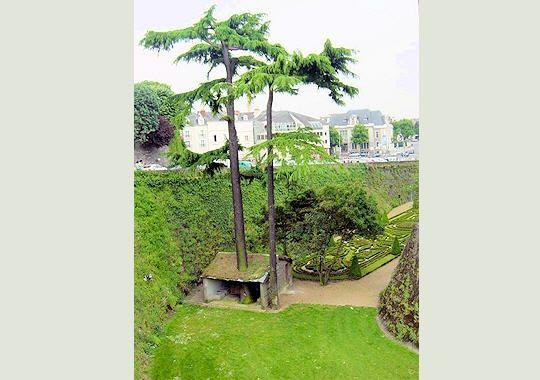 arbre-maison-277593-2074037.jpg
