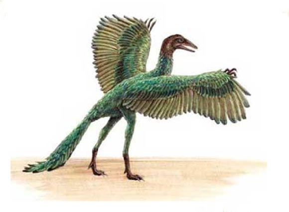 archaeopteryx-1-1a665fe.jpg