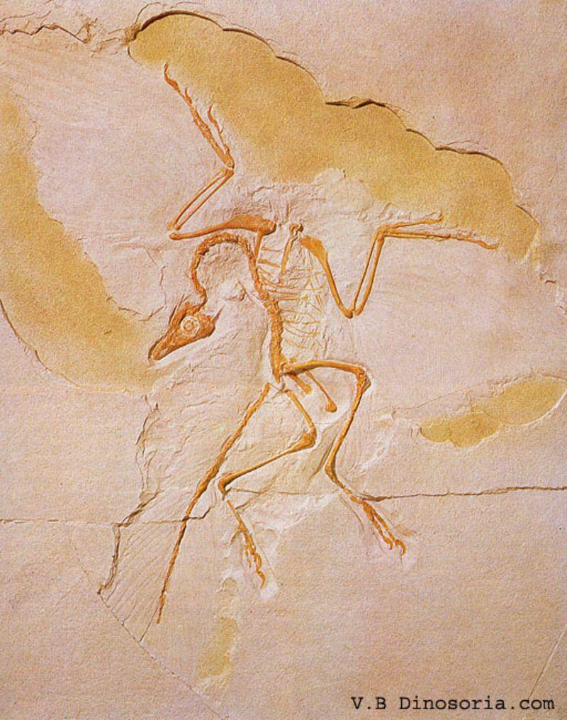 archaeopteryx-2-12f37d1.jpg