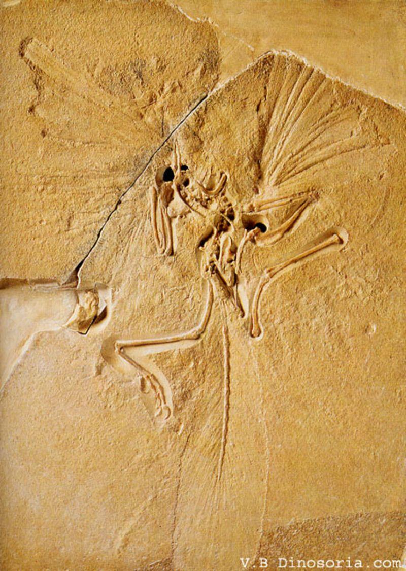 archaeopteryx-3-1a6662f.jpg