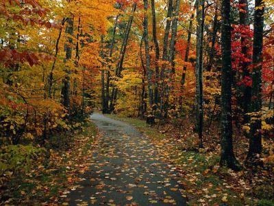 automne-1ff2180.jpg