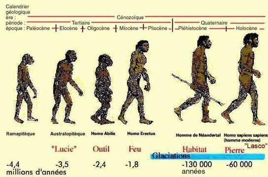 oligocene reconstitution animaux beneteau