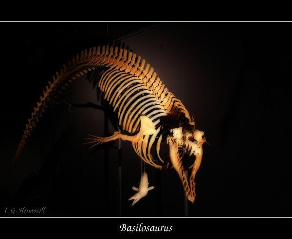 basilosaurus-10-1c7bdc2.jpg