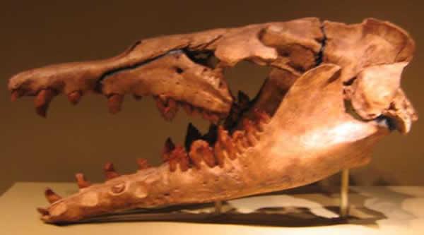 basilosaurus-192c30c.jpg