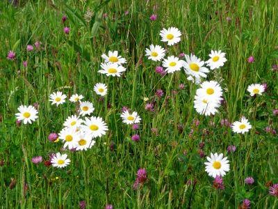 belles-fleurs-champs-fleurs-sauvages-captivantes_276198.jpg