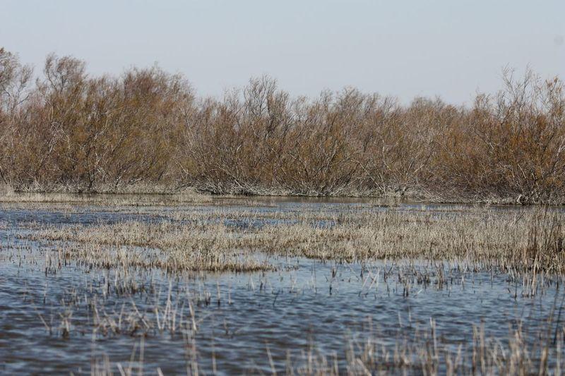 biotope-de-camargue-dis-sansouire-et-tamaris-pied-dans-l-eau-411.jpg