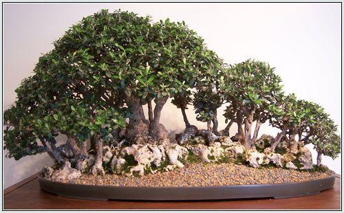 bonsai1-2158b07.jpg