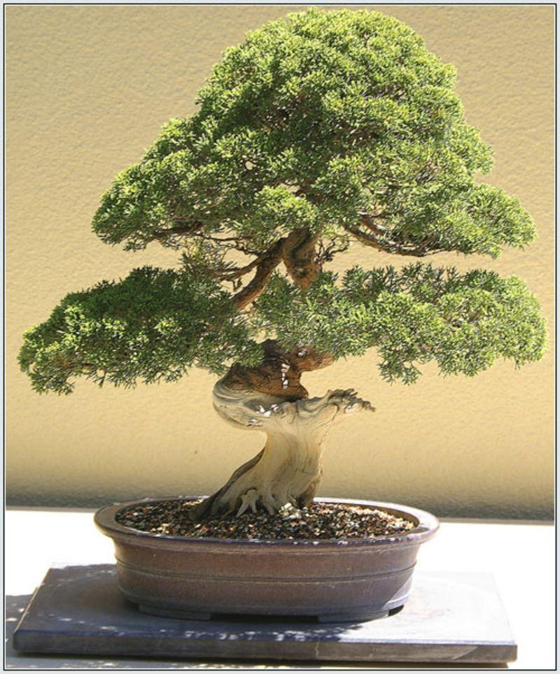 Arbres et arbustes (Le rhododendron -Le camélia -Le Bonsaï - et autres