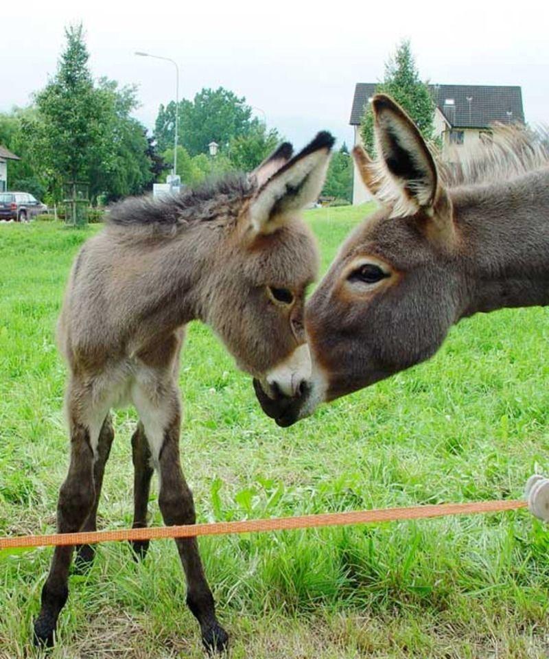 burros-133dd33.jpg