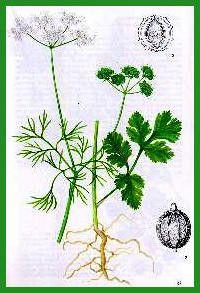 Sorcier(es) et sorcellerie - les Grimoires - Plantes -