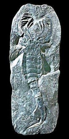 Animaux préhistoriques - premiers insectes -