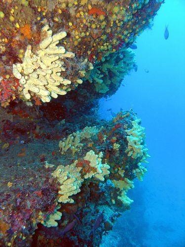 Monde marin - Les éponges -