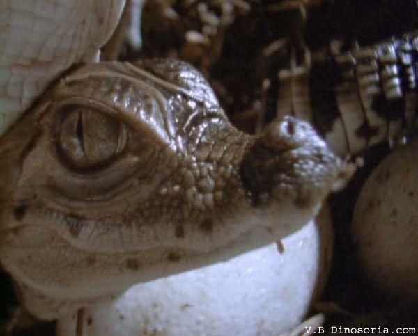 caiman-lunettes-10.jpg