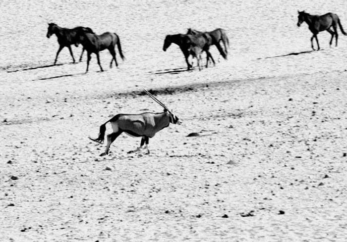 cheval-namibie-206502a.jpg