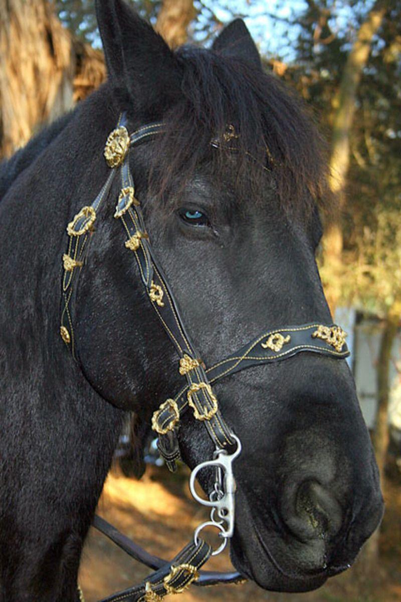 cheval-noir-1c504d3.jpg