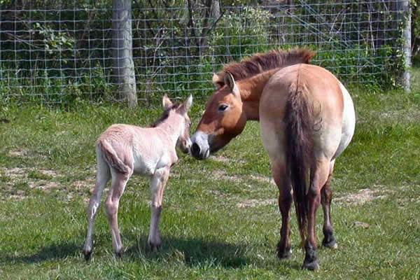 cheval-sauvage-2-2064e84.jpg