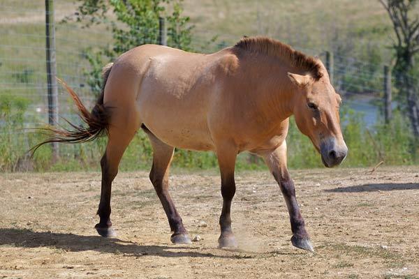 cheval-sauvage-2000-129597a1.jpg