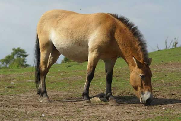 cheval-sauvage-4-133d9ba.jpg