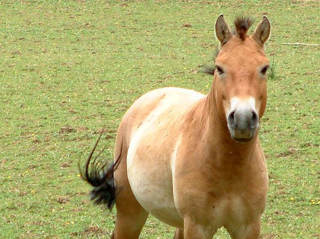 cheval2-uwcxx.jpg