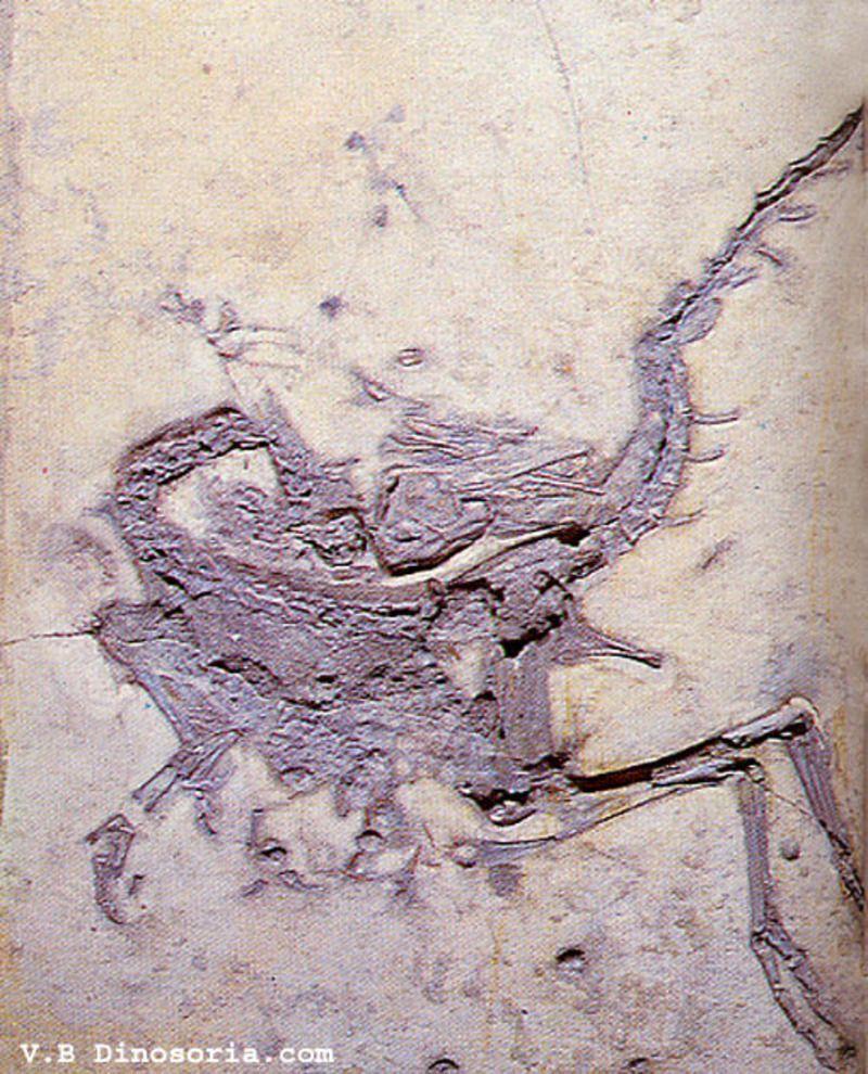 compsognathus-16f1dce.jpg