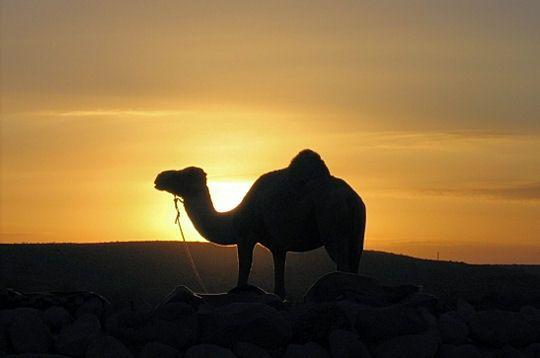 crepuscule-desert-.jpg