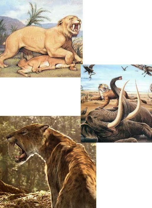 Animaux préhistoriques - les mammifères -
