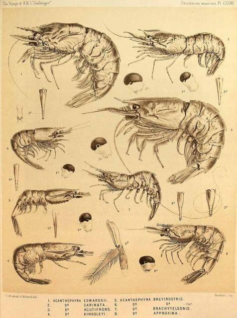 Animaux - crustacés-distribution geographique