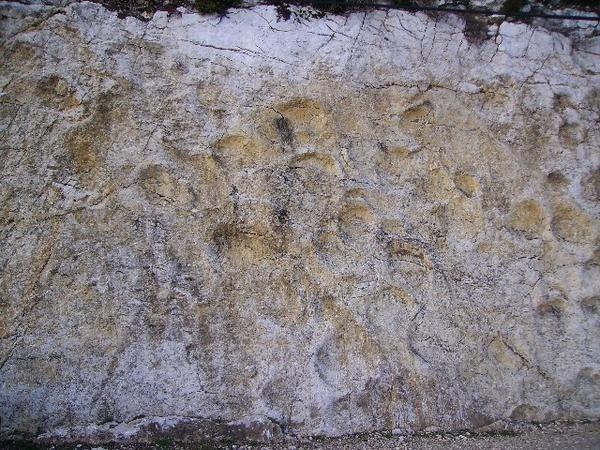 Fossiles et fossilisation - Empreintes de dinosaures -