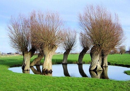 Arbres et arbustes - arbres insolites -