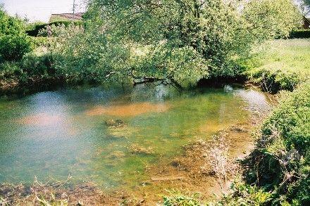 Ecosystèmes - La Mare - (suite)