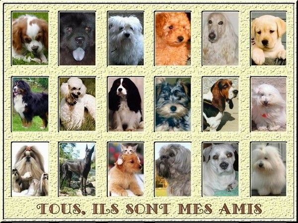 animaux de compagnie - Chiens - Origines -