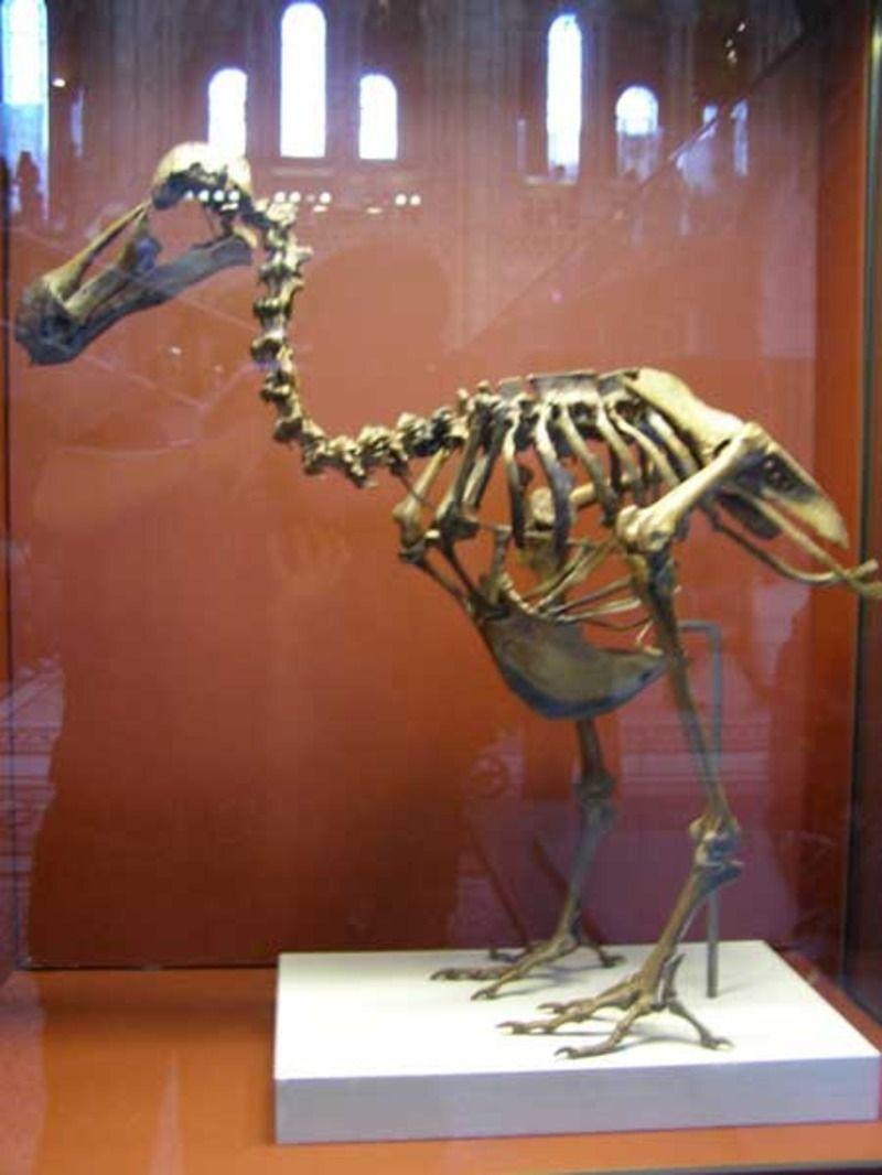 dodo4-13d30b7.jpg