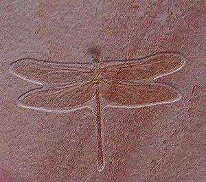 dragonflyfossil01-1e5da12.jpg