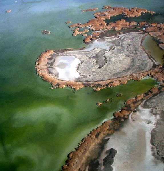 Lacs-Etangs-Great Salt Lake-Animaux et végétaux-