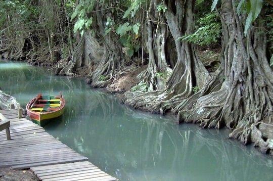Ecosystèmes - Tour du monde des mangroves -