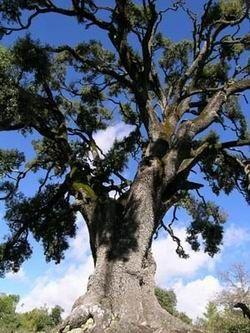 Arbres et arbustes - Les arbres remarquables - généralités -
