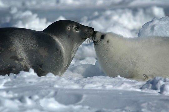 Monde marin - le phoque - présentation -