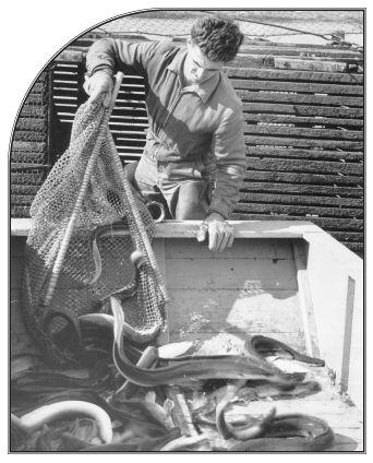 eel-anguille-06.jpg