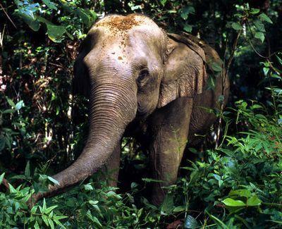 elephant-asie.jpg