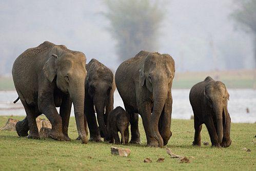 elephant-d-asie.jpg
