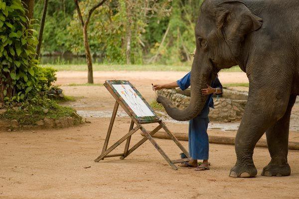 elephant-peintre-501-13a2eca.jpg