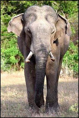 elephantas.jpg