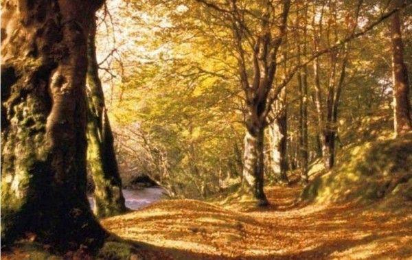 Arbres et arbustes-Le hit parade des arbres