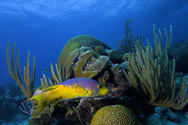 Les mers et océans - La Mer des Sargasses -