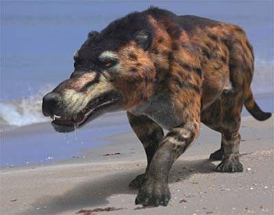 Animaux préhistoriques - Andrewsarchus . Les Condylarthres