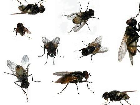 Animaux - insectes - La mouche -
