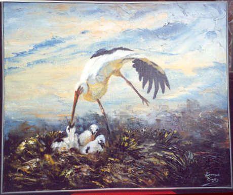 Animaux - Oiseaux - La Cigogne -
